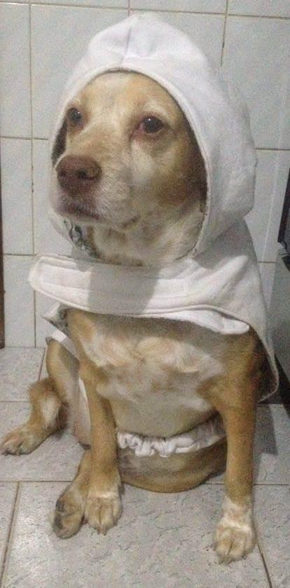 Cão Lassie - Tutora Luciana