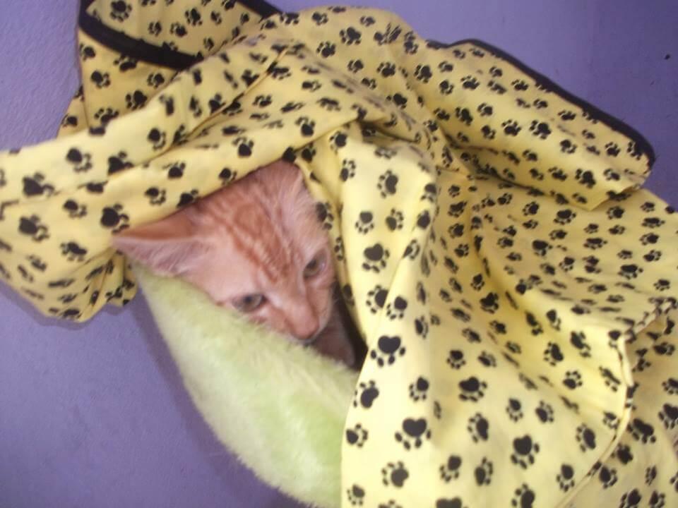 Gato Bananinha - Tutora Valéria