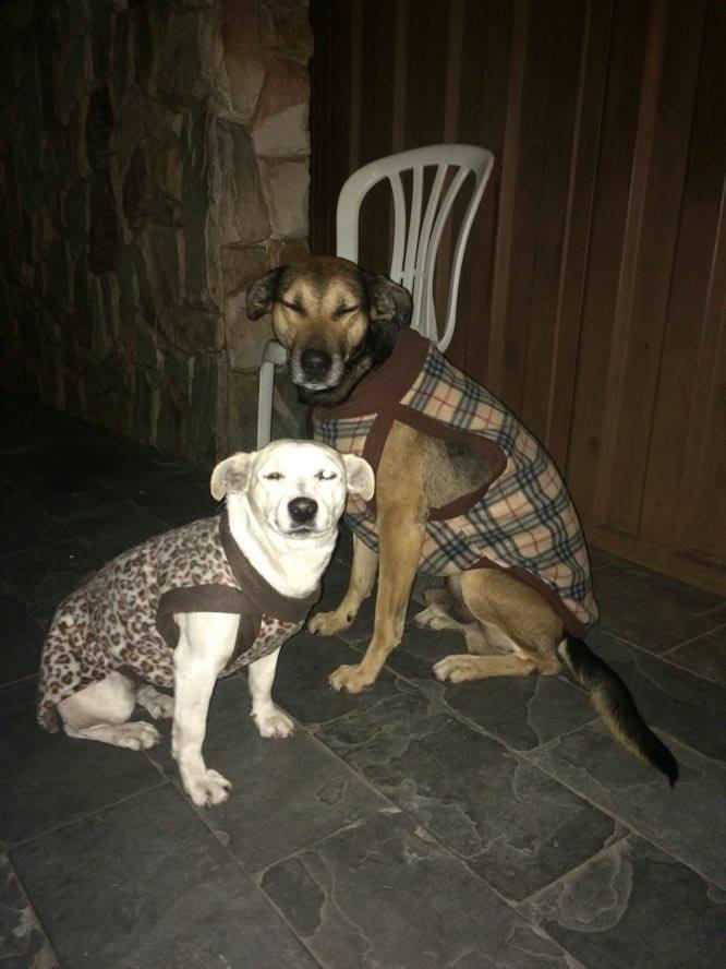Patrícia adquire roupinhas para Branquinha e Pitoco