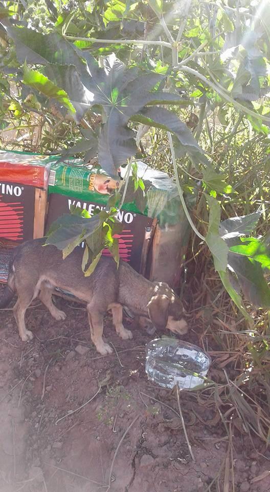 Rosália fez casinha - Cão em terreno