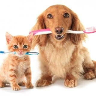 escova-de-dentes-gato-e-cachorro