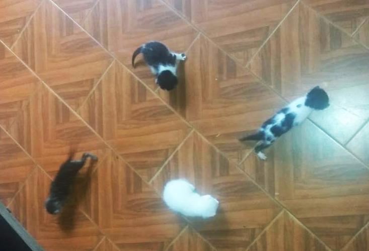 gatos-carandai