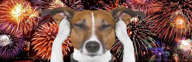 pets-e-fogos-de-artificio-32n97zmsxnpemiz6wigem8