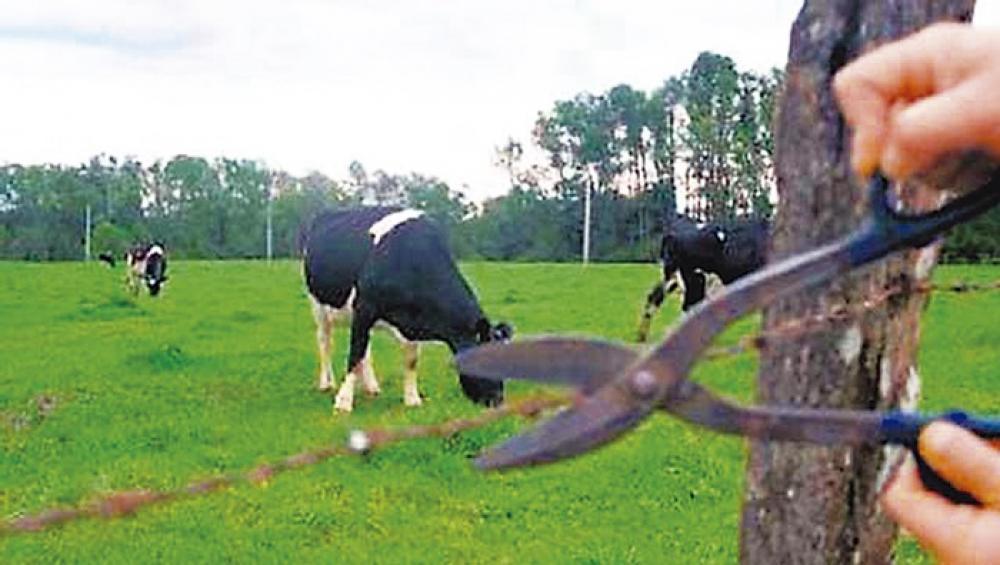 Autor de furto de gado se arrepende e acaba preso ao tentar devolver o gado furtado a vítima - Correio de Minas